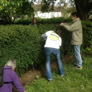 Hedge Trimming CEB